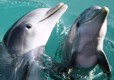 Private Dolphin Cruises for up to 98 guests from Destin or Okaloosa Island.